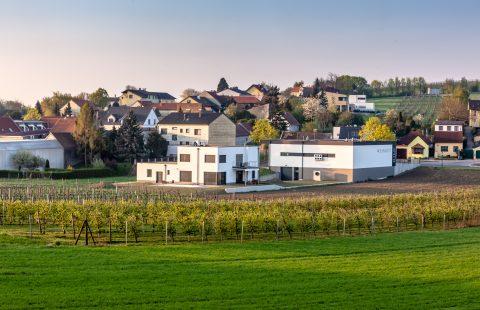 Weingarten_Weingut-Gilg_Hagenbrunn_Weinviertel_CR_GILG_2018_2239