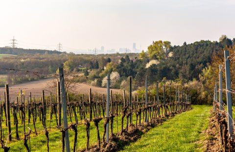Das Weingut Gilg mit Blick auf Wien