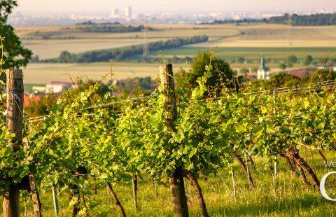 Weingut_Buschenschank_Gilg_Hagenbrunn_Weinviertel_Titelbild-Facebook-Profil_V1